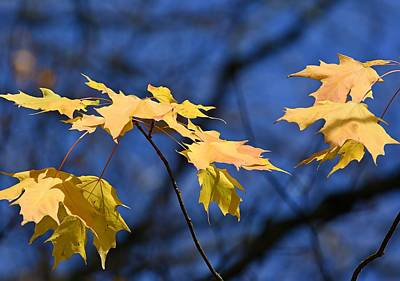Photograph - Autumn Gold by Fraida Gutovich