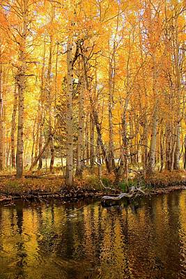 Photograph - Autumn Gold Rush by Sean Sarsfield
