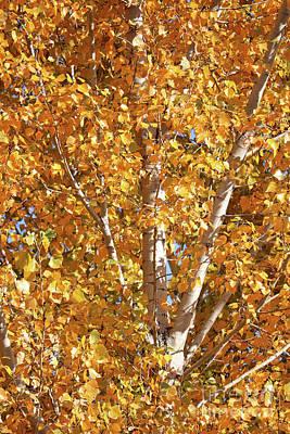 Photograph - Autumn Golden Leaves by Carol Groenen