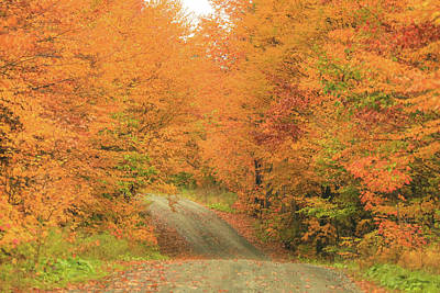 Photograph - Autumn Gravel Road by Dan Sproul