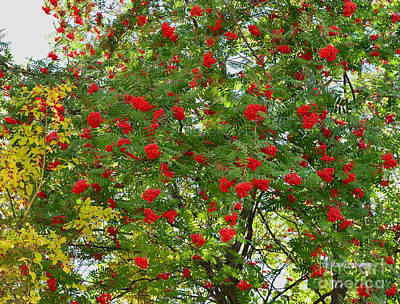 Photograph - Autumn Green And Red by Kae Cheatham