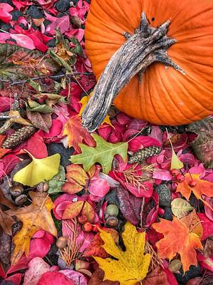 Photograph - Autumn Harvest by Jill Love