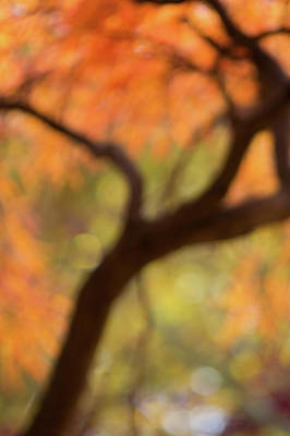 Photograph - Autumn Haze by Stewart Helberg