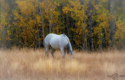 Photograph - Autumn Horse by Steph Gabler