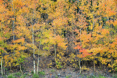 Photograph - Autumn Hues by Denise Bush