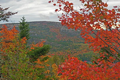 Photograph - Autumn In Acadia by Paul Mangold