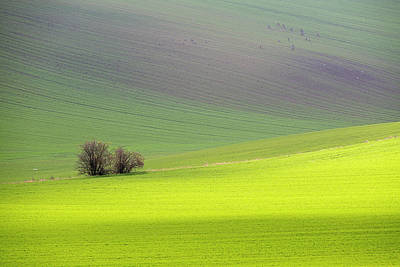 Photograph - Autumn In South Moravia 13 by Dubi Roman