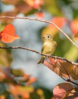 Photograph - Autumn Kinglet by Loree Johnson
