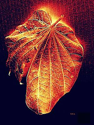 Photograph - Autumn  Leaf  Aglow by VIVA Anderson