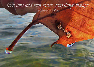 Photograph - Autumn Leaf And Leonardo Quote by Nancy Griswold