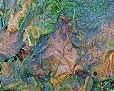 Abstract Shapes Janice Austin Royalty Free Images - Autumn Leaf Decay Royalty-Free Image by Darrel Giesbrecht
