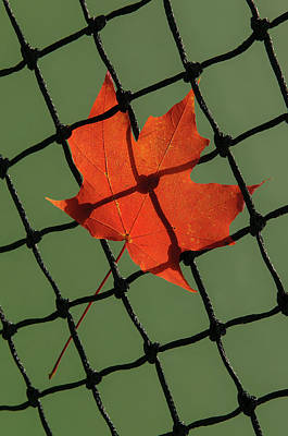 Photograph - Autumn Leaf In Tennis Net by Gary Slawsky