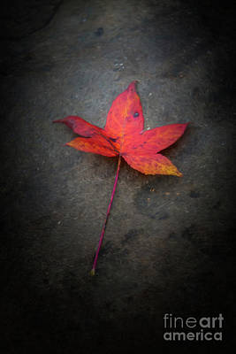 Photograph - Autumn Leaf by Joe Sparks