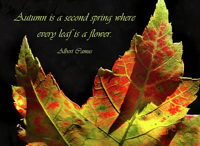 Photograph - Autumn Leaf With Albert Camus by Nancy Griswold