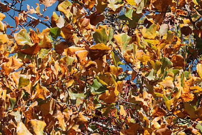 Photograph - Autumn Leaves 3432 by John Moyer