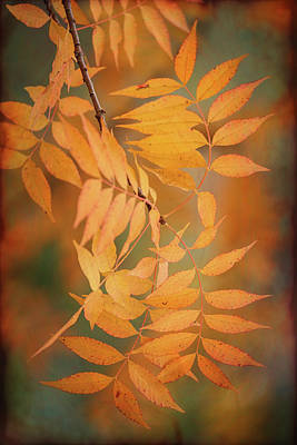 Photograph - Autumn Leaves Abstract  by Saija Lehtonen