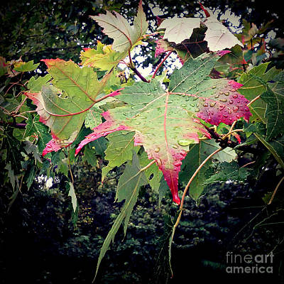 Frank J Casella Royalty-Free and Rights-Managed Images - Autumn Leaves and Raindrops by Frank J Casella