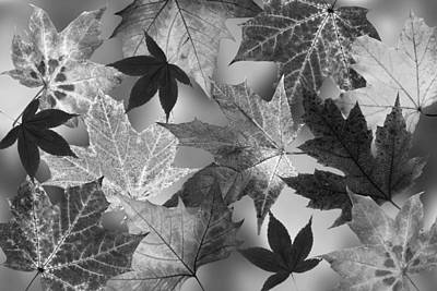 Photograph - Autumn Leaves Black And White by Gill Billington