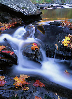 Leaf Photograph - Autumn Leaves In Little River, Great by Tim Fitzharris/ Minden Pictures
