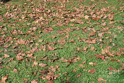 Photograph - Autumn Leaves On Grass by George Atsametakis