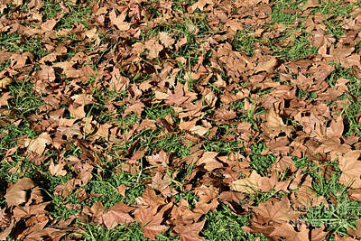 Photograph - Autumn Leaves On Grass II by George Atsametakis