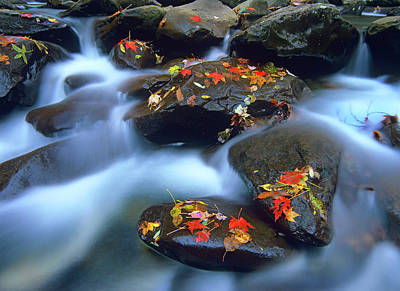 Photograph - Autumn Leaves On Wet Boulders In by Tim Fitzharris/ Minden Pictures