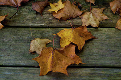 Photograph - Autumn Leaves On Wood by Helen Northcott