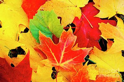 Photograph - Autumn Leaves by Scott Kemper