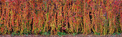 Photograph - Autumn Wall by Wim Lanclus