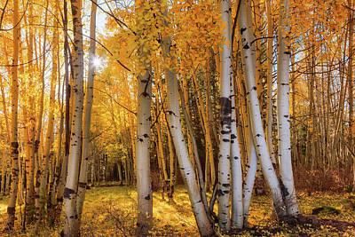 Photograph - Autumn Light by Rick Furmanek