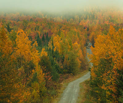 Photograph - Autumn Logging Road In Maine by Dan Sproul