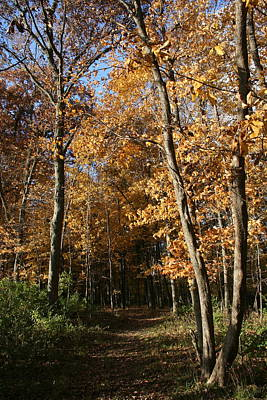 Photograph - Autumn Merwin Trail by Dylan Punke