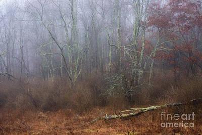 Photograph - Autumn Mist Wildlife Management Area by Thomas R Fletcher