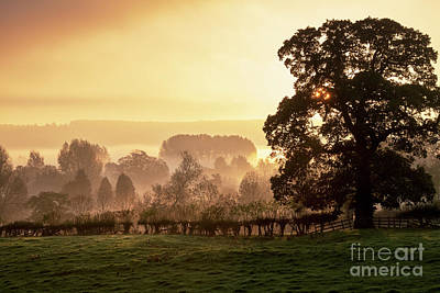Photograph - Autumn Mists At Sunrise Near Lower Slaughter by Tim Gainey