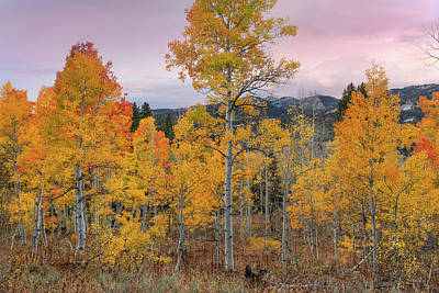 Photograph - Autumn Morning Brilliance by Leland D Howard