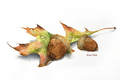 Sean Rights Managed Images - Autumn Oak and Acorns Royalty-Free Image by Michael Malta