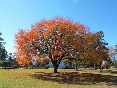 Photograph - Autumn Of Hope by Matthew Seufer