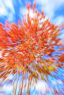 Photograph - Autumn On Blue by Dan Sproul
