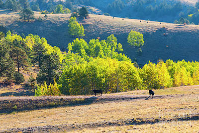 Photograph - Autumn On The Cattle Range by Steve Krull