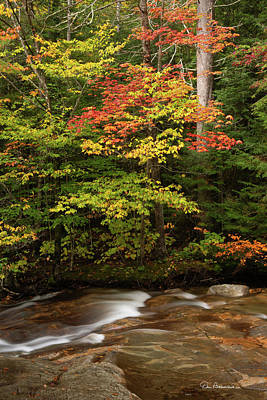 Dan Beauvais Royalty-Free and Rights-Managed Images - Autumn on the Pemigewasset 2380 by Dan Beauvais
