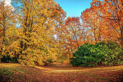Studio Grafika Science - Autumn park color by Peter Moderdovsky
