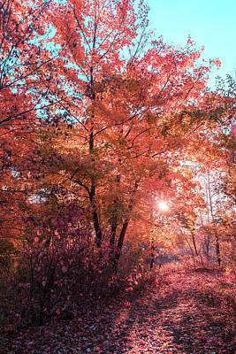 Mistletoe - Autumn Path Reimagined by Georgia Mizuleva