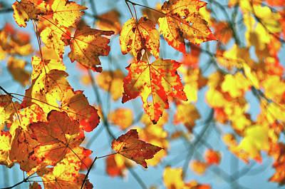 Photograph - Autumn Petals by JAMART Photography