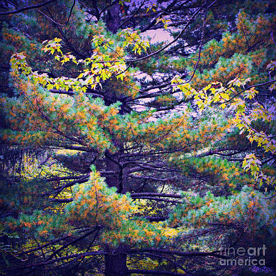 Frank J Casella Royalty-Free and Rights-Managed Images - Autumn Pine by Frank J Casella