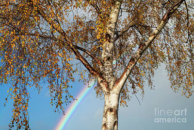 Photograph - Autumn Rainbow by Tim Gainey
