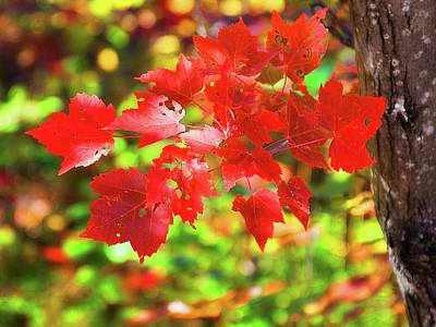 Photograph - Autumn Red Leaves by Tatiana Travelways
