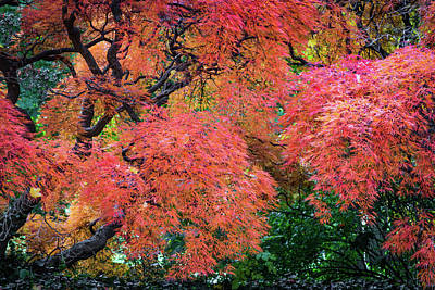 Photograph - Autumn Reds by Stewart Helberg