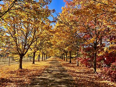 Photograph - Autumn Road by Brian Eberly