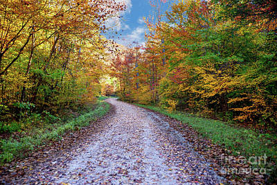 Photograph - Autumn Road by Ed Taylor