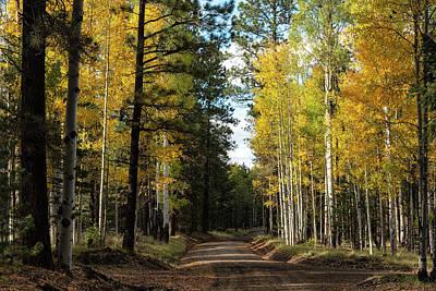 Photograph - Autumn Road  by Saija Lehtonen